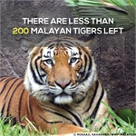Donate RM10 to help WWF-Malaysia's Conservation Efforts